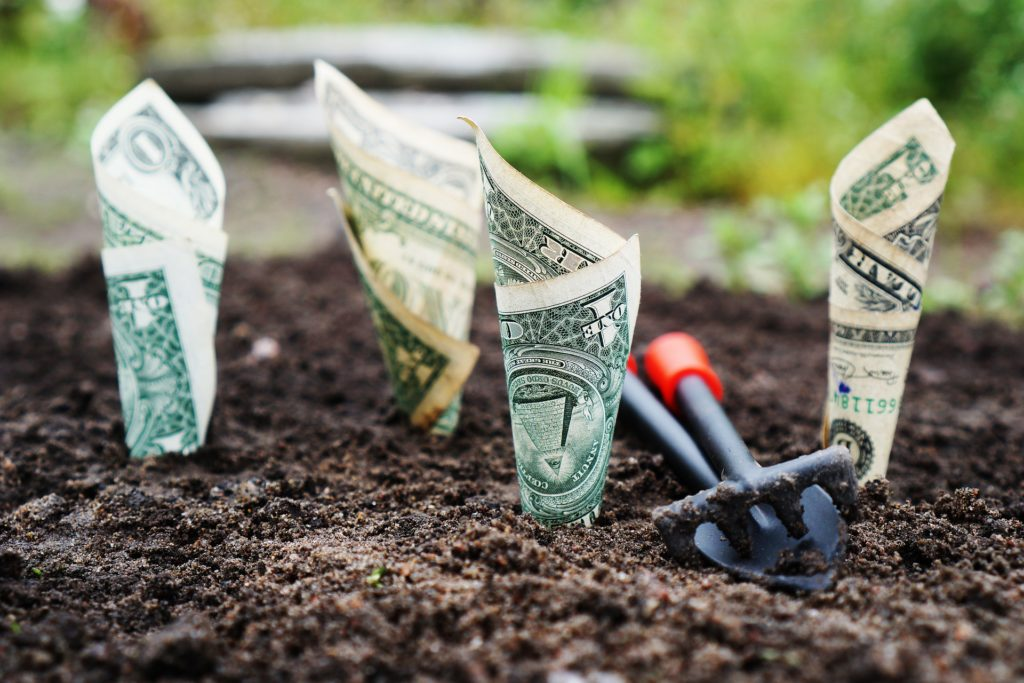 planted money in garden